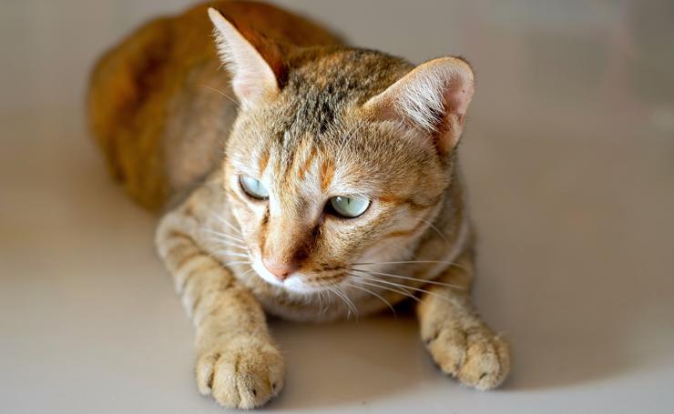 猫 下痢 血便