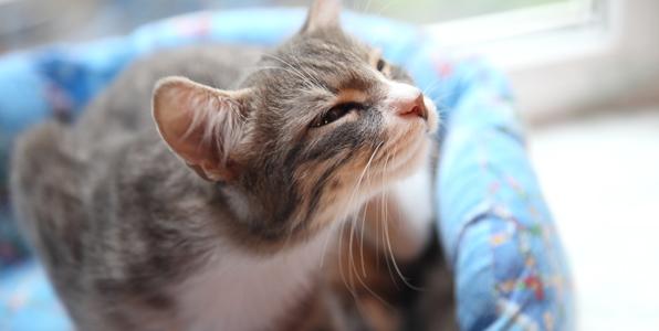 初質問です。m(__)m猫の駆除について相談させて下 …