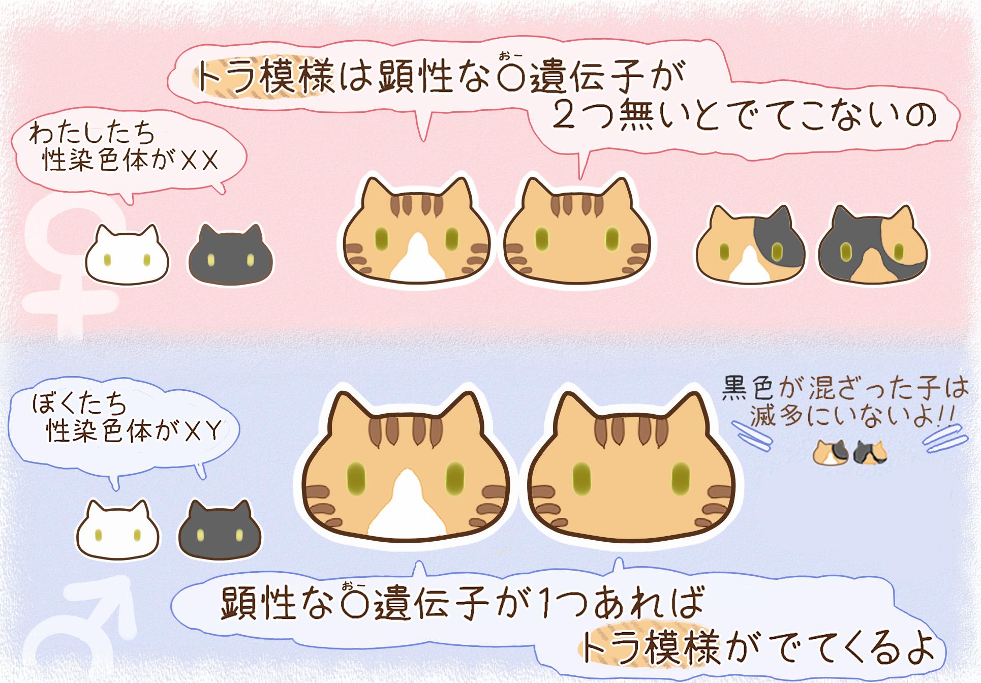 ネコの染色体09282