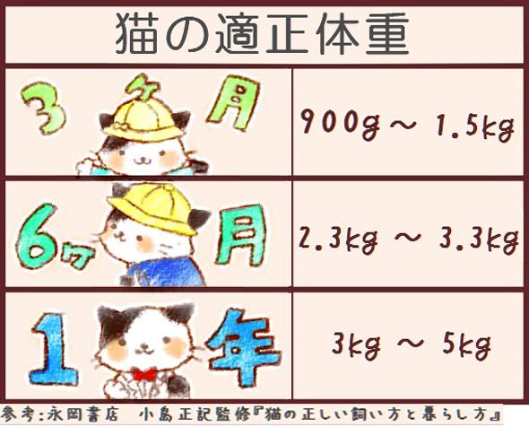 猫の標準体重09282
