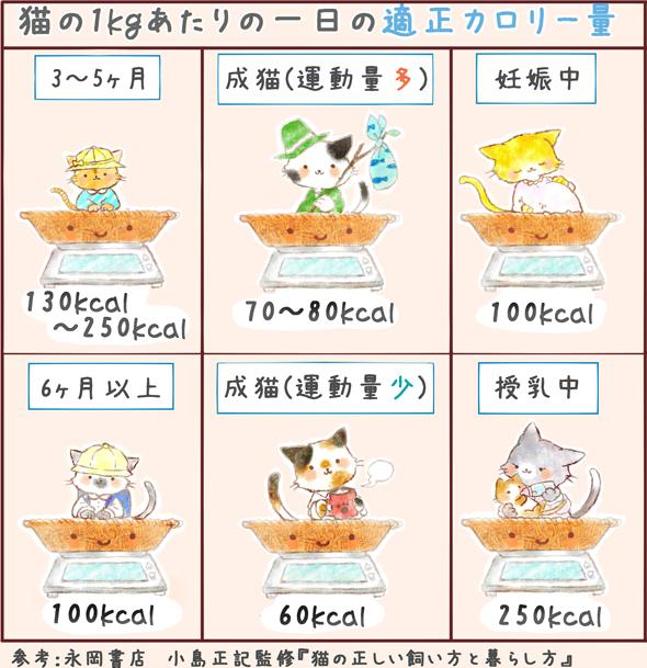 年齢別で見る、猫の適正カロリー所要量09283