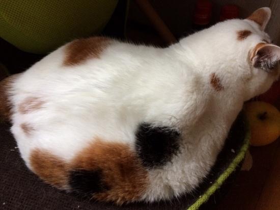 三毛猫の性格10255