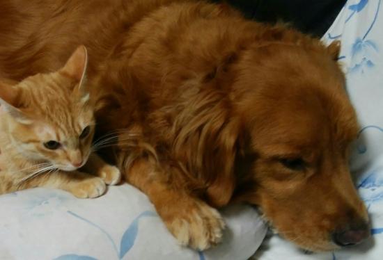 猫と犬を一緒に飼うときのポイント10252