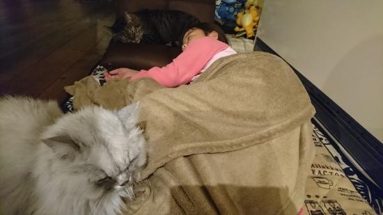 猫と子供の関わり方10194