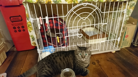 猫のケージ飼い 10171