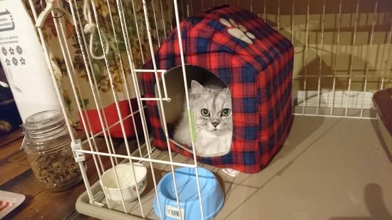 猫のケージ飼い10173