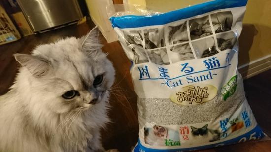 猫のケージ飼い10174