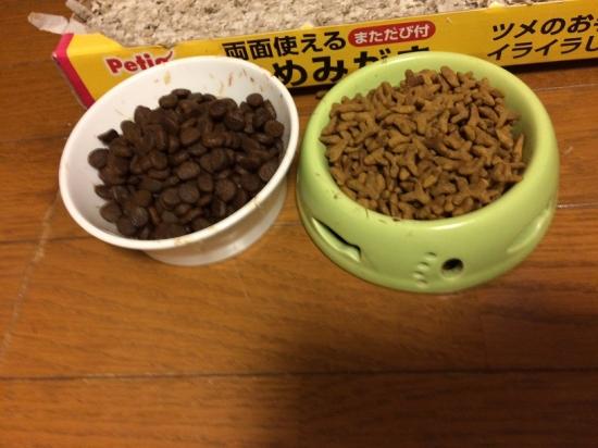 猫のご飯に含まれるタンパク質10254
