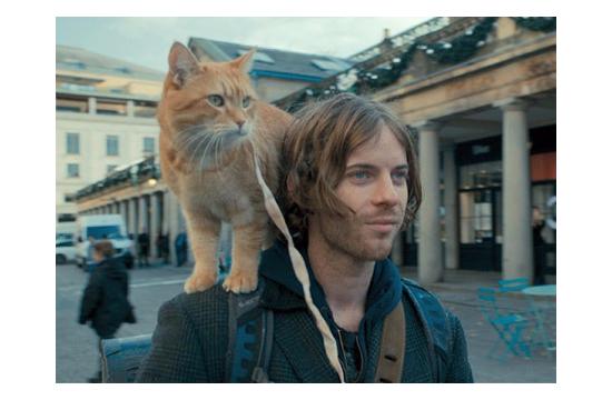 世界一有名な肩乗り猫10030