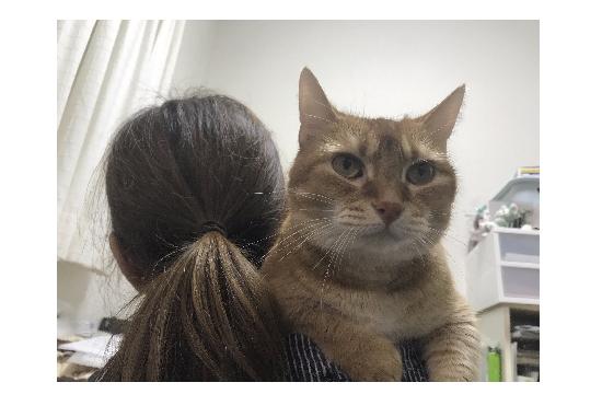 肩に乗るわが家の猫の写真