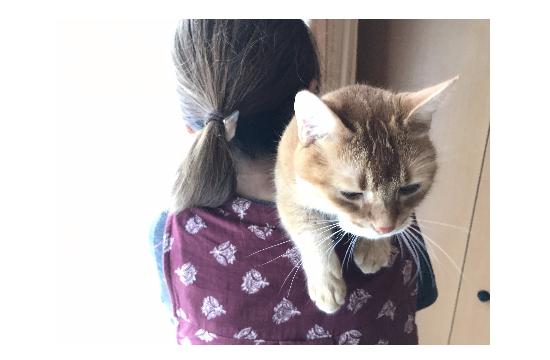 世界一有名な肩乗り猫10035
