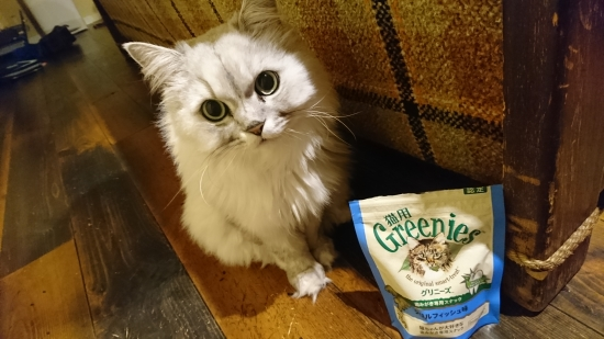 猫が吐く原因10134