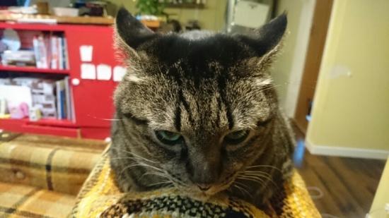 ネコの褒め方 11011