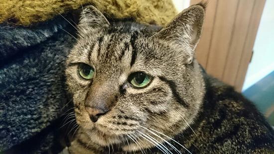 猫がゴロゴロ言う理由11061