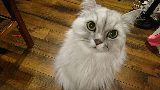 猫がゴロゴロ言う理由11064