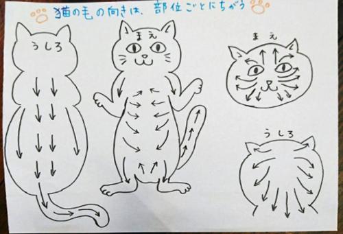 ネコのブラッシング11075