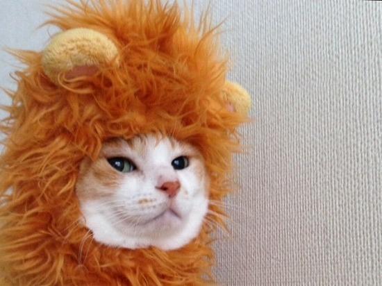 赤毛の猫65181