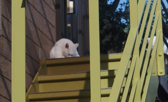 白猫 65183