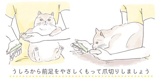 猫の爪切りの体勢