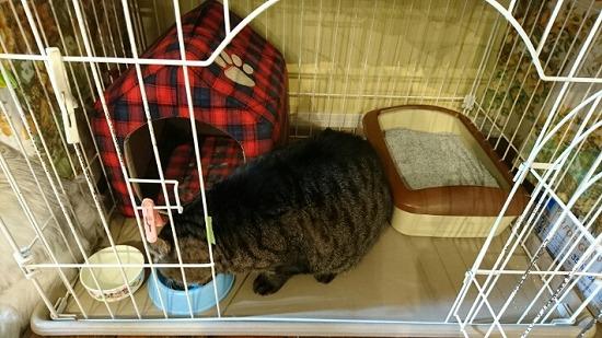 子猫のトイレのしつけt94354