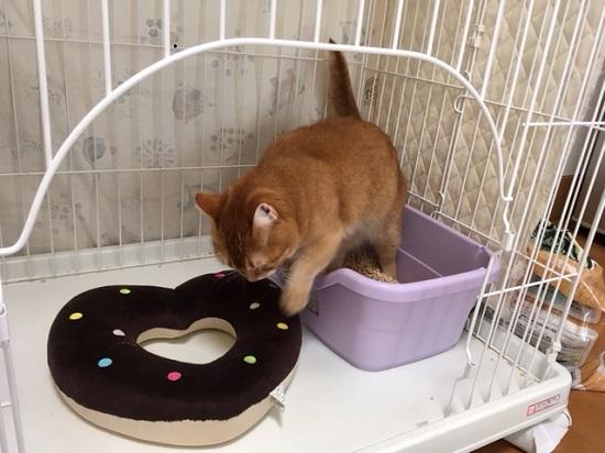 猫のトイレ56412