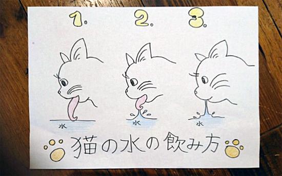 猫の舌の仕組み3655