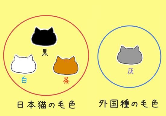 灰色猫の性格11013
