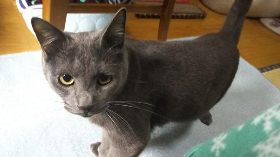 灰色猫の性格11014
