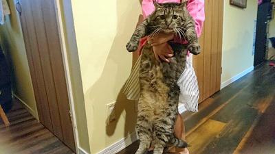 猫の持ち方説明写真1
