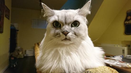 猫は一人暮らしで飼えるのか11013