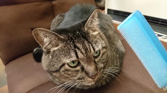猫は一人暮らしで飼えるのか11014