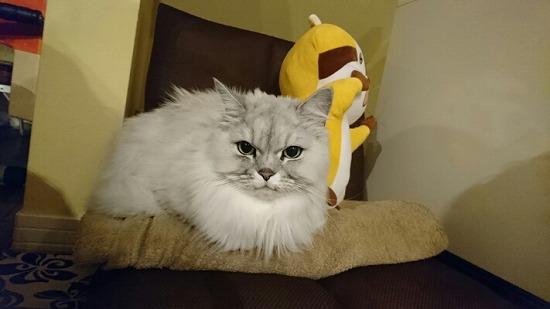 猫の記憶力はどれくらいある? 68541