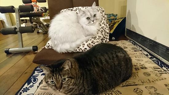 猫が喜ぶ場所84451