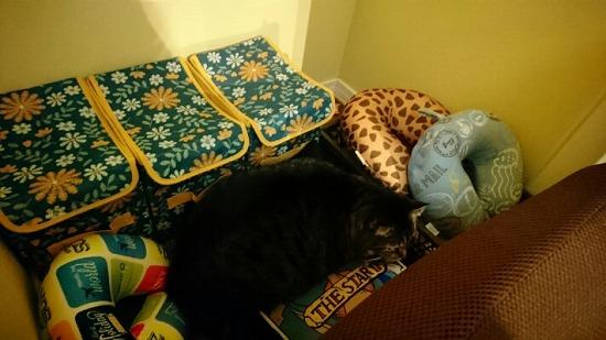 猫が喜ぶ場所84452