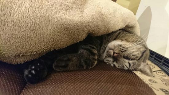 猫が喜ぶ場所84454