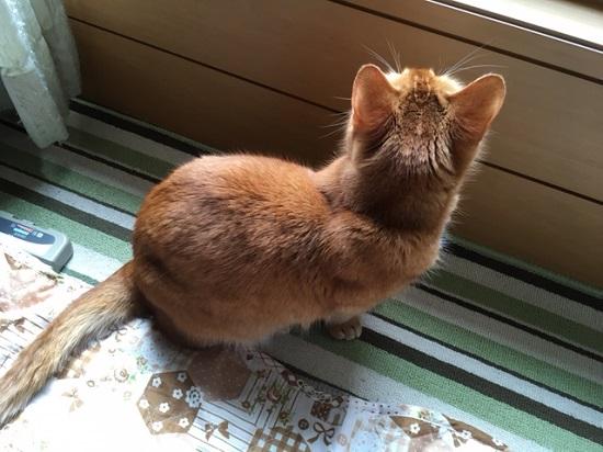 猫ちゃんのおるすばん352142