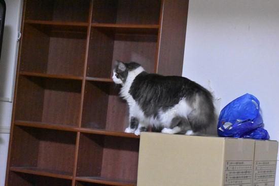 段ボールの上に乗る猫の写真
