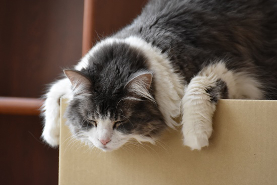 段ボールと猫の写真