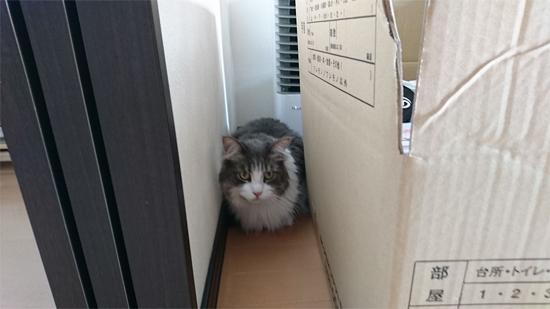 隠れている猫の写真