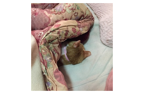 猫が布団にもぐってくる理65184
