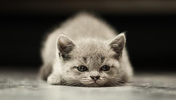 猫の顎ニキビの取り方。黒いブツブツ症状を悪化させずに治す ...