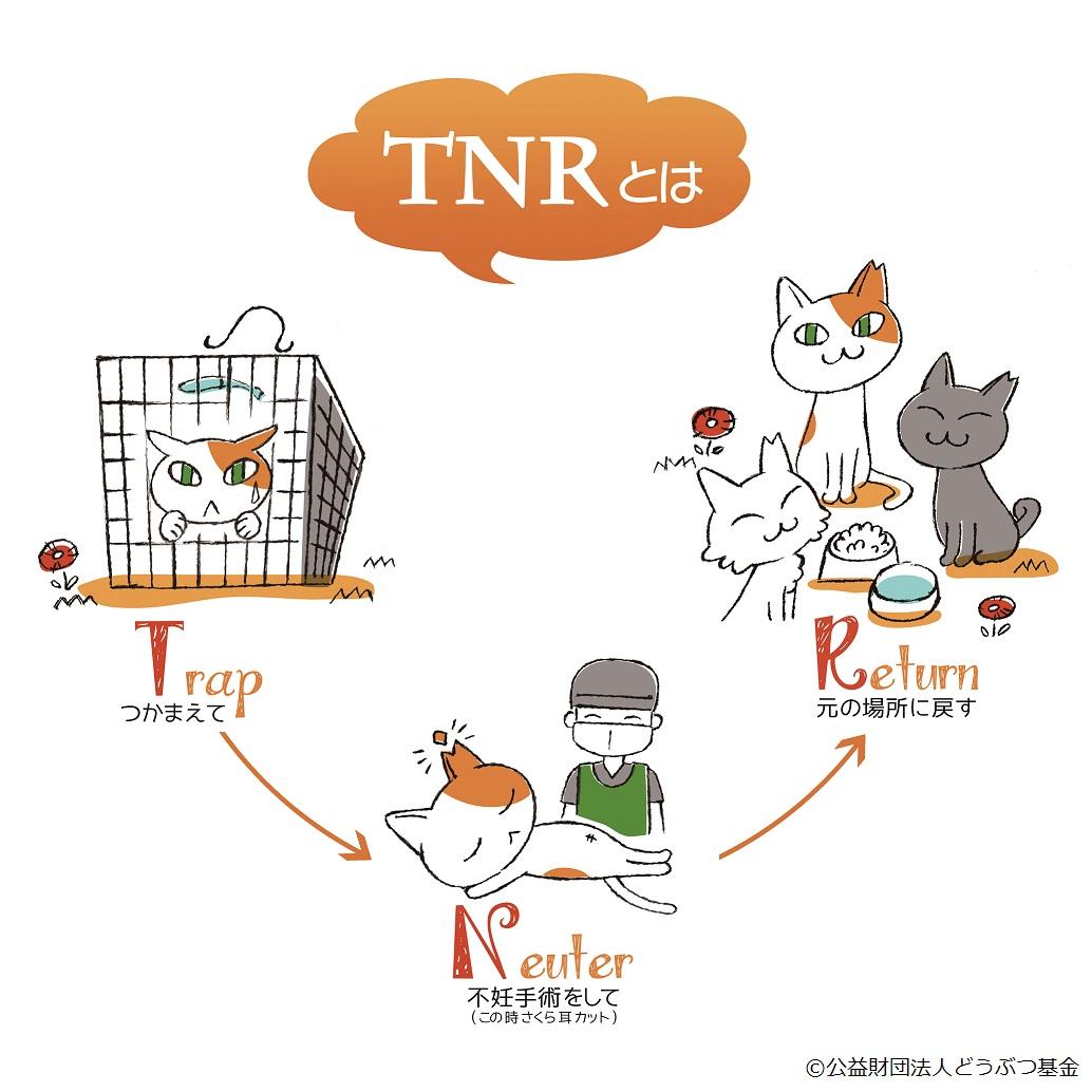 tnr活動の説明イラスト