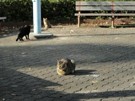 猫の集会 6351