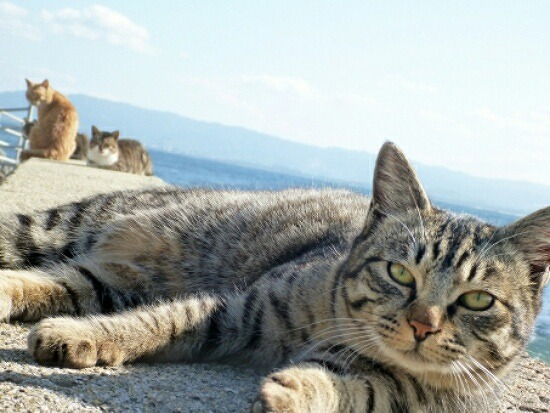 猫の集会 6354