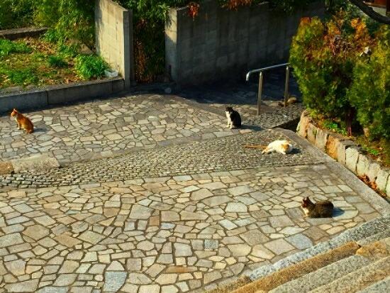 猫の集会 6352