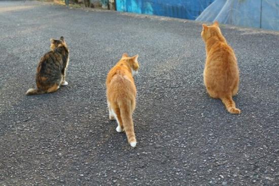 猫の集会 6353