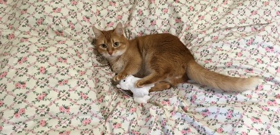 猫のおもちゃ91511