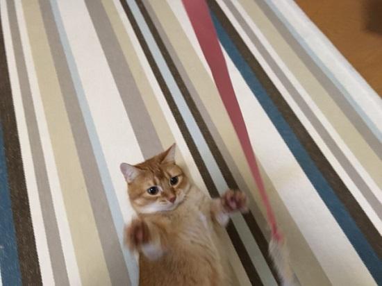 猫のおもちゃ915113