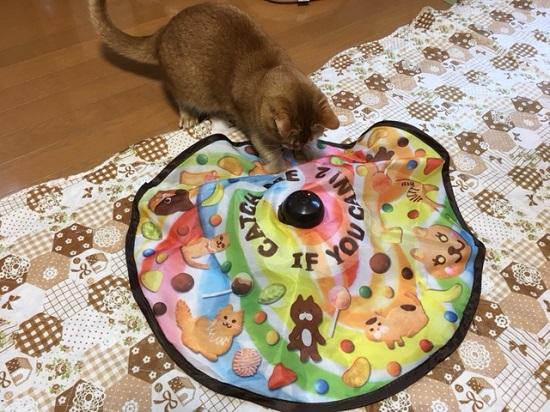 猫のおもちゃ91515