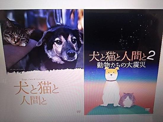 猫の映画12055